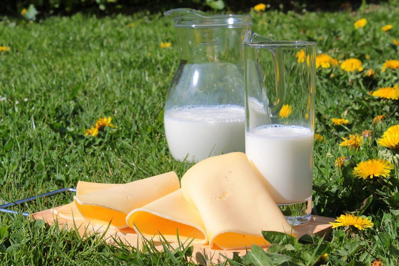 草原にチーズと牛乳