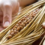 【納豆】美容に効果あり♪納豆の賞味期限はいつまでなら食べれるの?