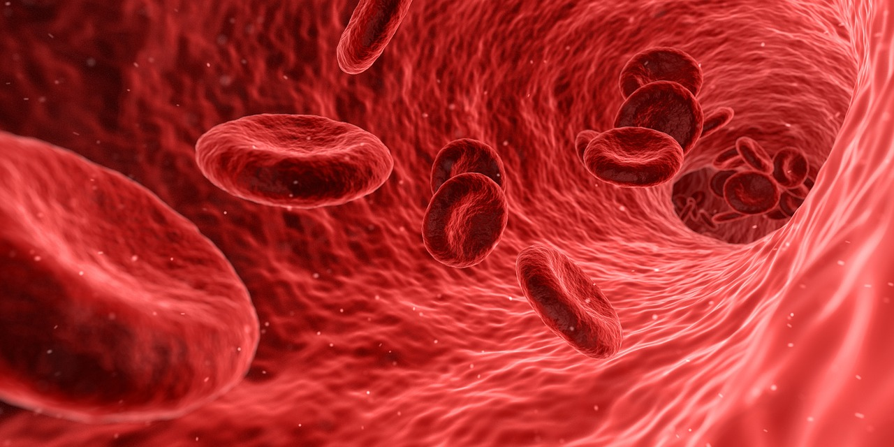 血液を流れる赤血球
